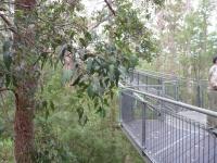 Walking the Tree Top Walk (Rama Sugiartha)