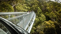 The Treetop Walk