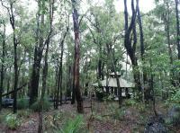 Rainy Trees Pt2