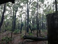 Rainy Trees Pt3